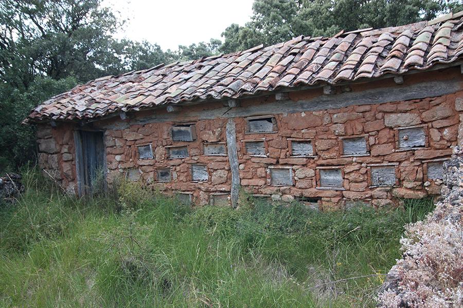Colmenar-Cozuelos de Ojeda- Tío Aurelio