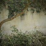 árbol-olivo-naturaleza-medio-ambiente