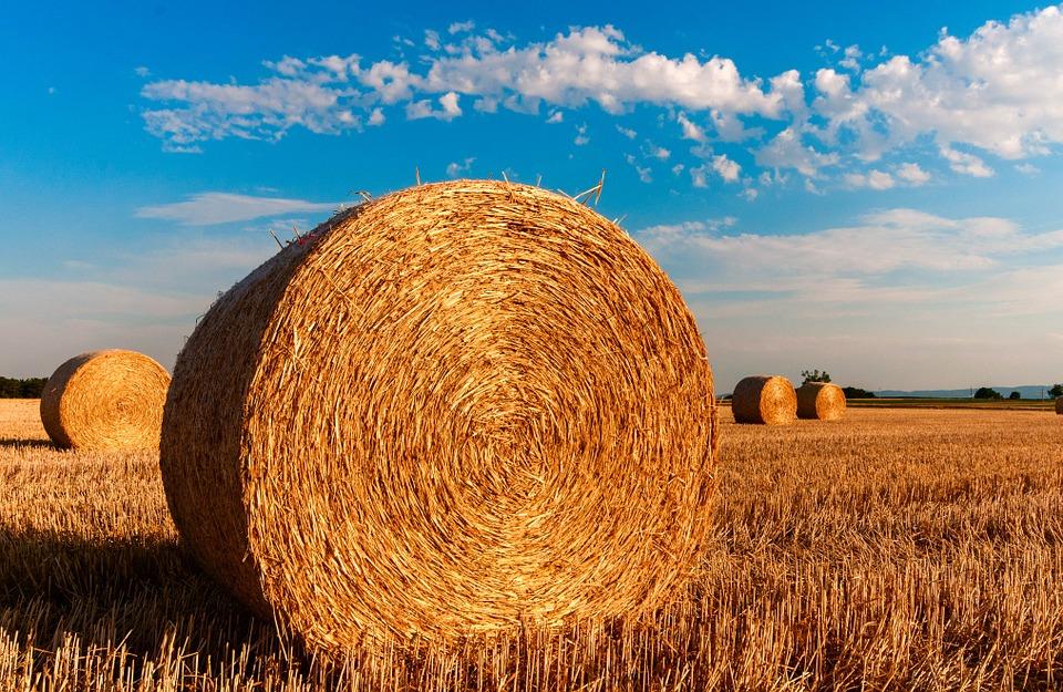 agricultura cosecha campo