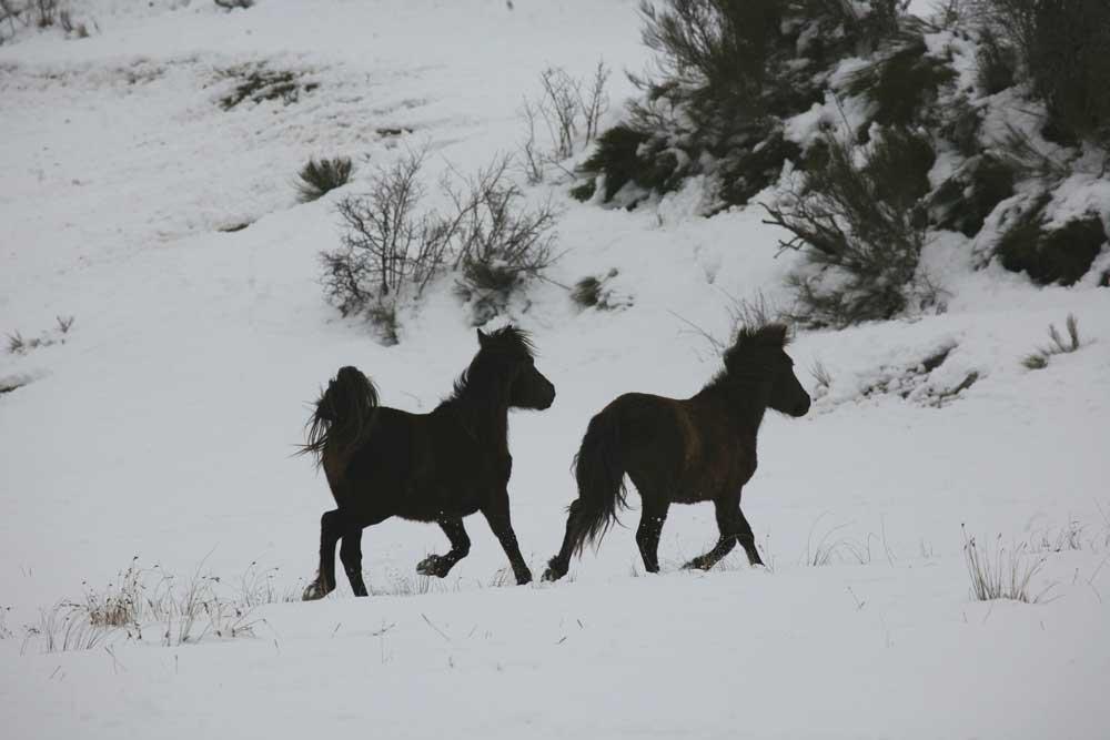 caballos-montaña-Palentina