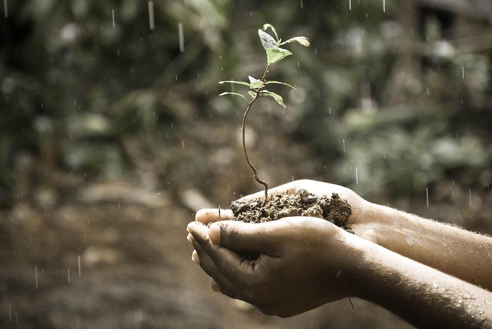 manos-campo-naturaleza-agricultura