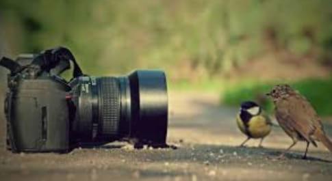 Carrión Medio Ambiente Fotografía